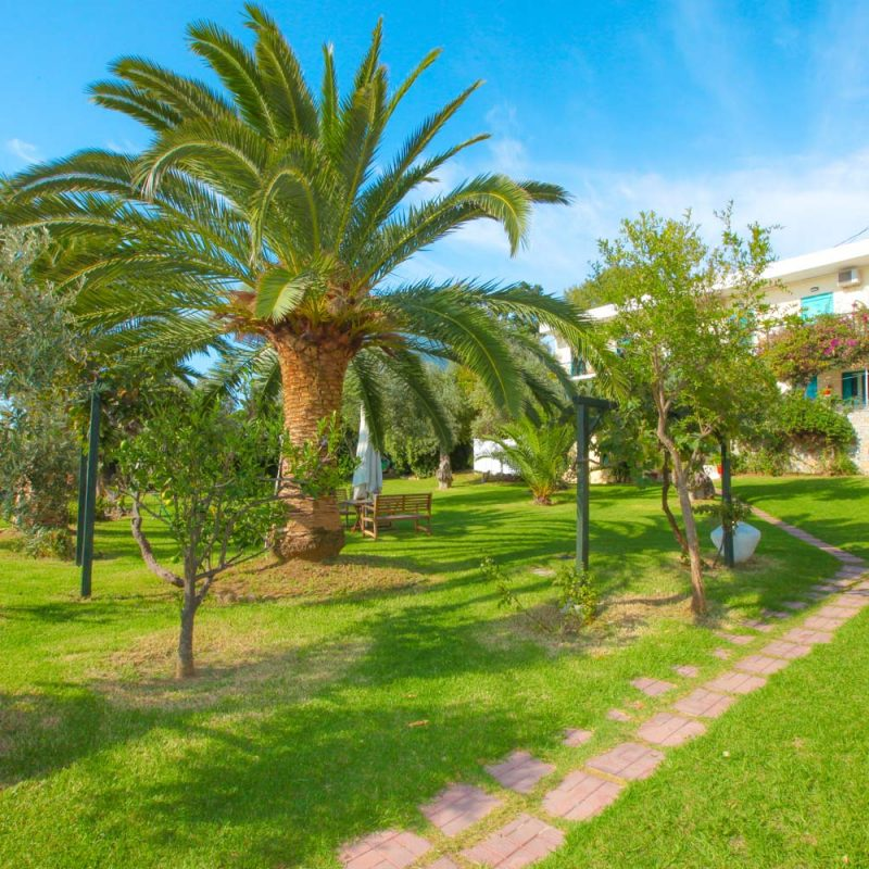 Garden Palm Tree View - Angeliki Beach Hotel