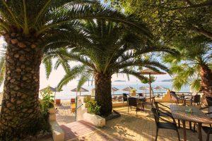 Swell Beach Bar Palm Trees Entrance from The beach